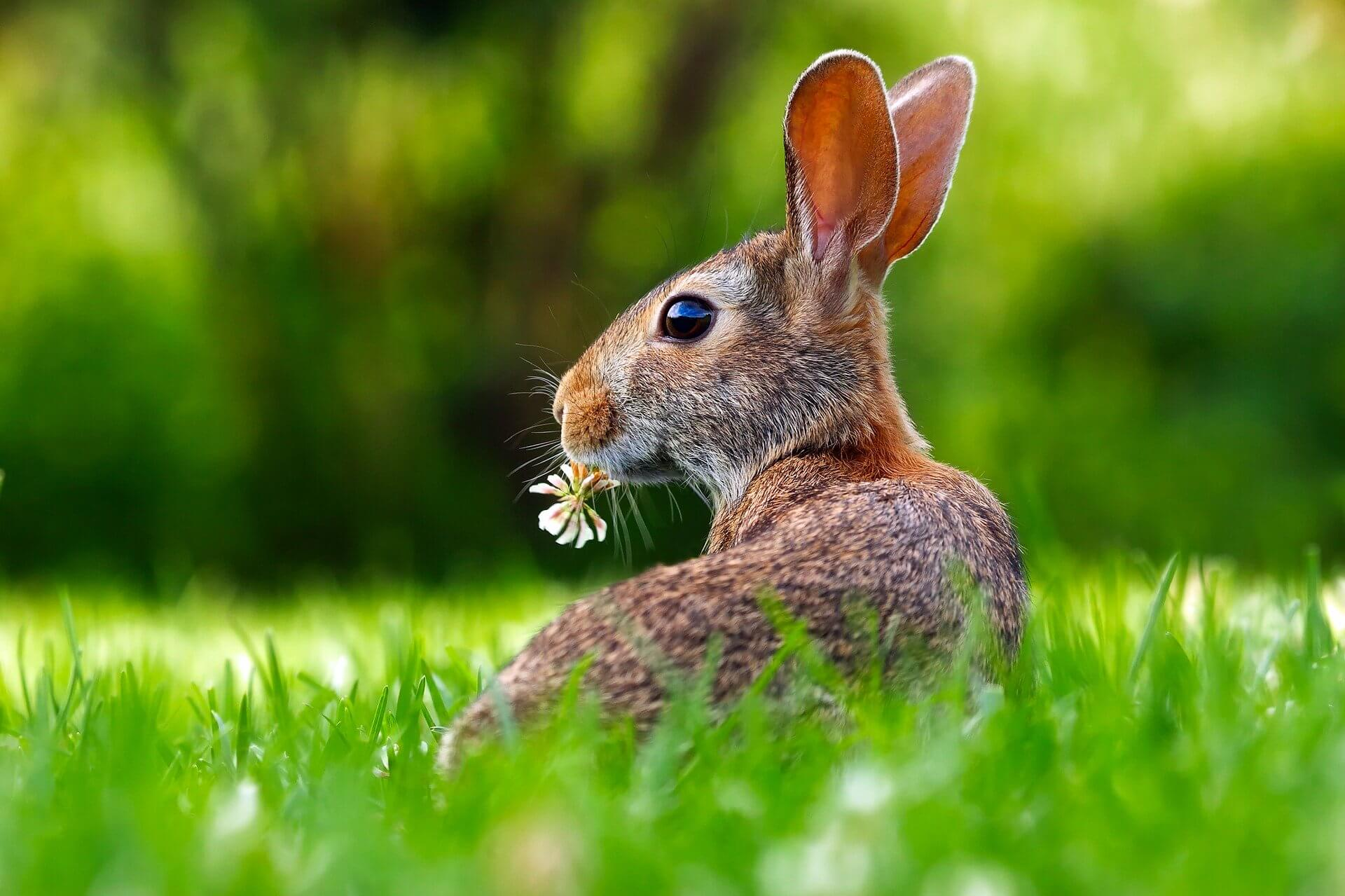 animal test-free company bunny